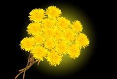 Gele paardebloemen Stock Afbeeldingen