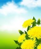 Gele paardebloemen Stock Afbeelding