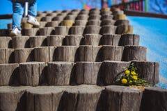 Gele Paardebloemen op de oude houten treden royalty-vrije stock foto
