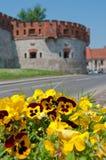 Gele pansies en de Wawel kasteelmuren. Royalty-vrije Stock Afbeeldingen