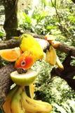 Gele papegaai Stock Afbeeldingen