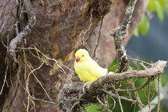Gele papegaai op boomtakken stock foto's