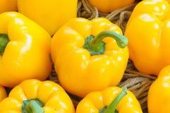 Gele paprika's in landbouwbedrijven. Royalty-vrije Stock Afbeeldingen