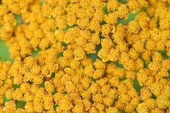 Gele patroonbloemen _2 Royalty-vrije Stock Foto