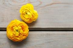 Gele Perzische boterbloemenbloemen (ranunculus) Stock Fotografie