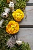 Gele Perzische boterbloemenbloemen (ranunculus) op mos Royalty-vrije Stock Afbeeldingen