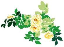 Gele pioenbloem vector illustratie