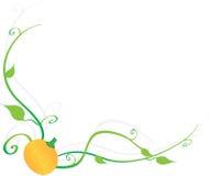 Gele pompoen Stock Illustratie
