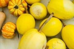 Gele Pompoen Royalty-vrije Stock Afbeeldingen