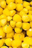 Gele pompoen op vertoning Stock Afbeelding