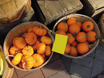 Gele pompoenen, cucurbitapepo bij de groene markt Stock Foto