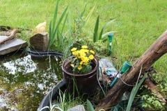 Gele pondbloemen stock foto's