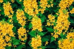 Gele pracht - Bloemen Stock Afbeeldingen