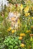 Gele proteabloemen en netel in een mooie tuin stock afbeelding