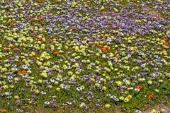 Gele, purpere en oranje wildflowers royalty-vrije stock afbeeldingen