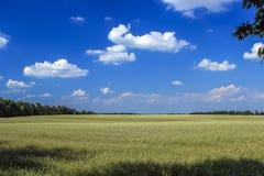 Gele raapzaadbloemen op gebied met blauwe hemel Royalty-vrije Stock Foto's