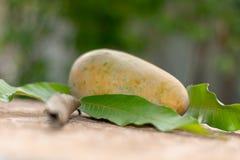 Gele rijpe mango, mangobladeren aan de kant stock foto's