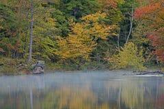 Gele, Rode en Groene Bezinningen in de Herfst royalty-vrije stock foto's