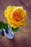 Gele romantisch nam in Witte ceramische vaas toe Stock Foto's