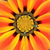 Gele, rood-oranje bloem Stock Foto's