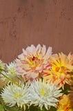 Gele roze witte Dahliabloem Royalty-vrije Stock Afbeelding