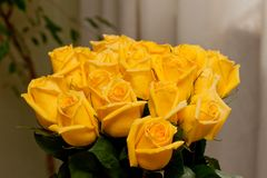 Gele rozen Royalty-vrije Stock Foto's