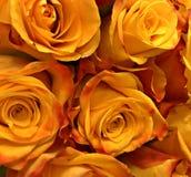 Gele Rozen, bloemenboeketachtergrond voor druk of online gebruik royalty-vrije stock foto