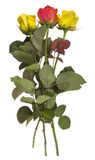 Gele rozen - en geïsoleerd rood Stock Fotografie