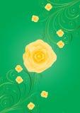 Gele rozen met krullen op groene achtergrond Royalty-vrije Stock Afbeelding