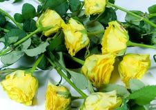 Gele rozenachtergrond Royalty-vrije Stock Afbeeldingen