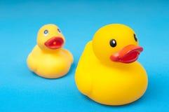Gele rubbereend op blauw water als achtergrond Royalty-vrije Stock Foto