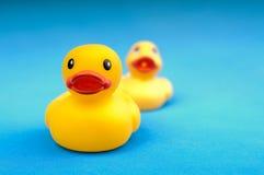 Gele rubbereend op blauw water als achtergrond Stock Foto