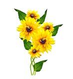 Gele rudbeckiabloem Stock Afbeeldingen