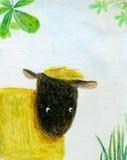 Gele schapen Stock Foto's