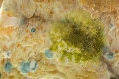 Gele schimmel op gevormd oud wholewheat brood stock foto's