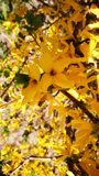 Gele schoonheid royalty-vrije stock afbeeldingen