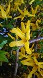 Gele schoonheid stock afbeeldingen