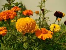 Gele schoonheid 3 Royalty-vrije Stock Foto's