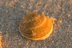 Gele shell Stock Fotografie