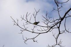 Gele siskin op een tak stock fotografie