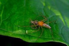 Gele spin op de bladeren Stock Afbeeldingen