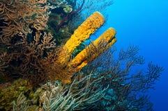 Gele spons Royalty-vrije Stock Afbeeldingen