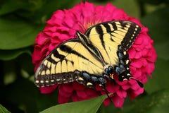 Gele Swallowtail-Vlinder in Bloemtuin royalty-vrije stock afbeeldingen