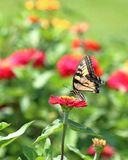 Gele Swallowtail-Vlinder in Bloemtuin royalty-vrije stock foto
