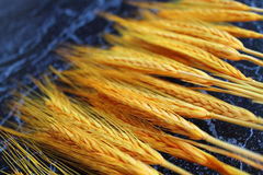 Gele tarwe Royalty-vrije Stock Foto's