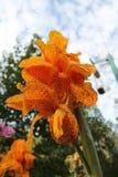 Gele Tropische Bloem royalty-vrije stock afbeeldingen