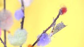 Gele tropische vlinderzitting op een stok stock videobeelden