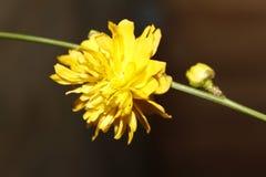 Gele tuinbloem op tak Stock Foto