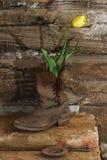 Gele tulp in oude het werklaarzen Stock Afbeeldingen