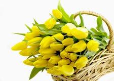 Gele tulpen Royalty-vrije Stock Fotografie